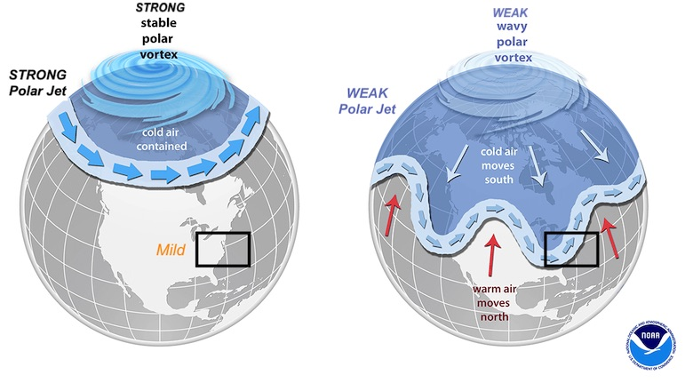 Polar Vortex Science